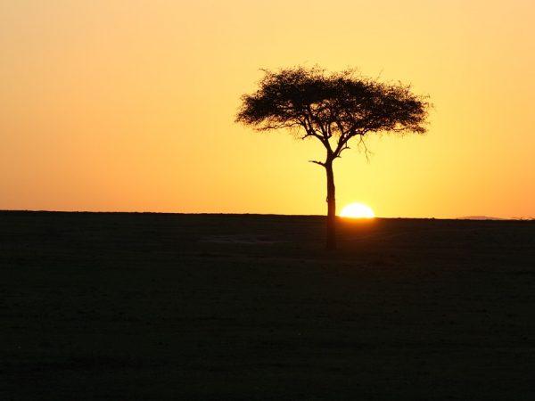 masai-mara-3006874_960_720